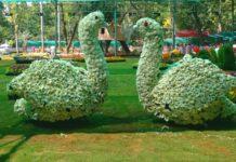 When Pondicherry is in full bloom