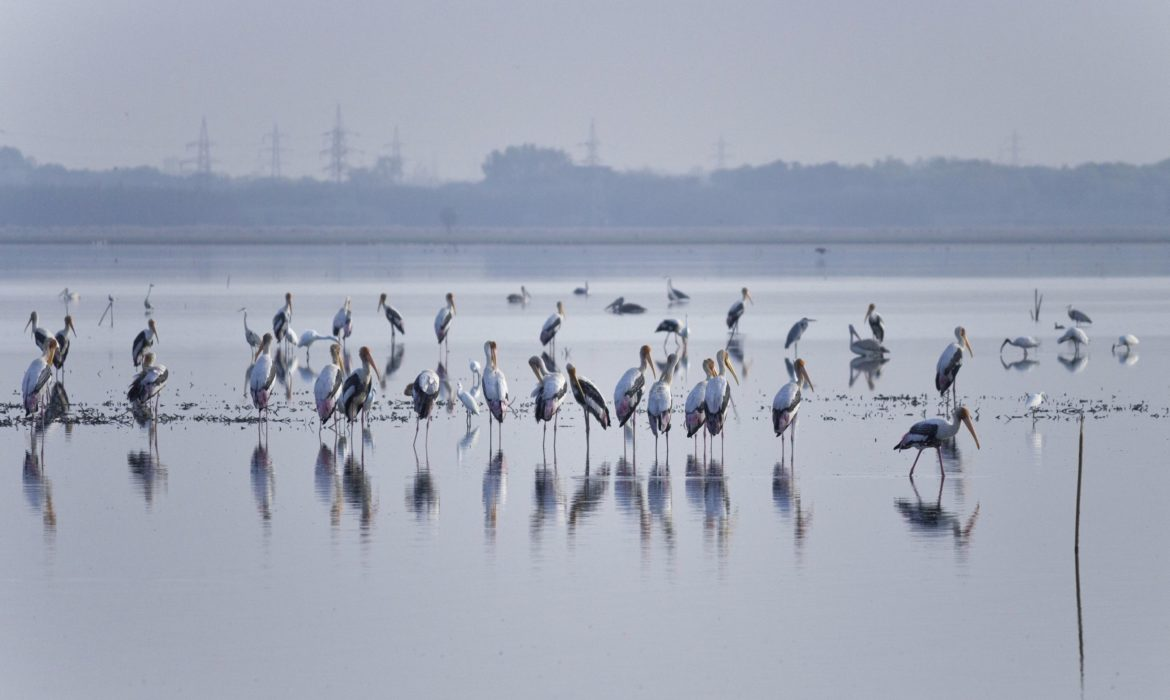 BIRDS AT OUSTERI LAKE IN PONDICHERRY