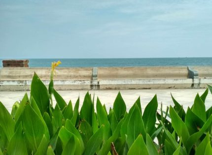 Simple Pleasures of a Pondicherry Summer: starry nights, sea breeze and surf
