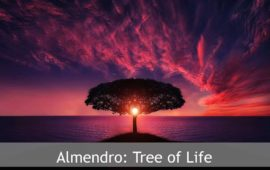 Sadhana Forest – Friday Eco Film Club: Almendro: Tree of Life