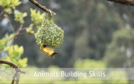 Sadhana Forest – Friday Eco Film Club: Animals Building Skills