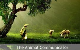 Sadhana Forest – Friday Eco Film Club: The Animal Communicator