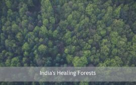 India's Healing Forests