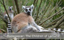 Sadhana Forest – Friday Eco Film Club: The Children of Lemuria