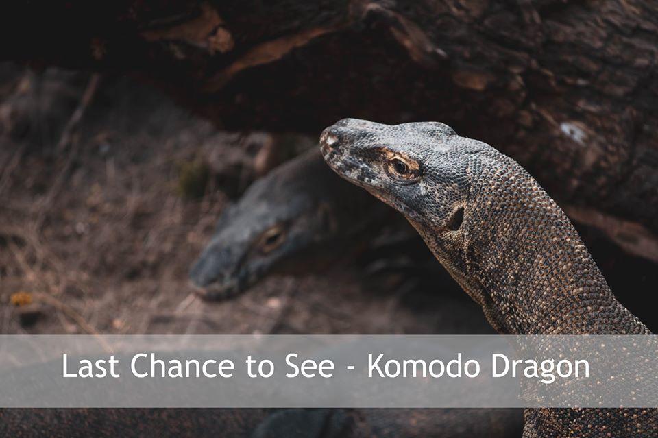 Last chance to see Komodo Dragon