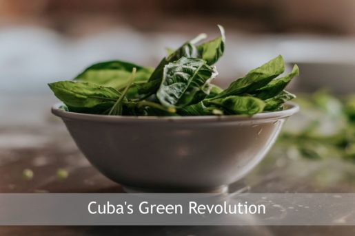 Sadhana Forest – Friday Eco Film Club: Cuba's Green Revolution