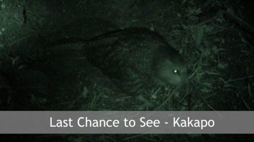 Last Chance to See - Kakapo – Eco Film Club